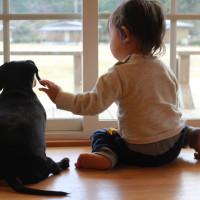 窓と犬と男の子